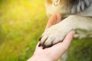 a man holds the paw of the dog. veteran PTSD recovery.